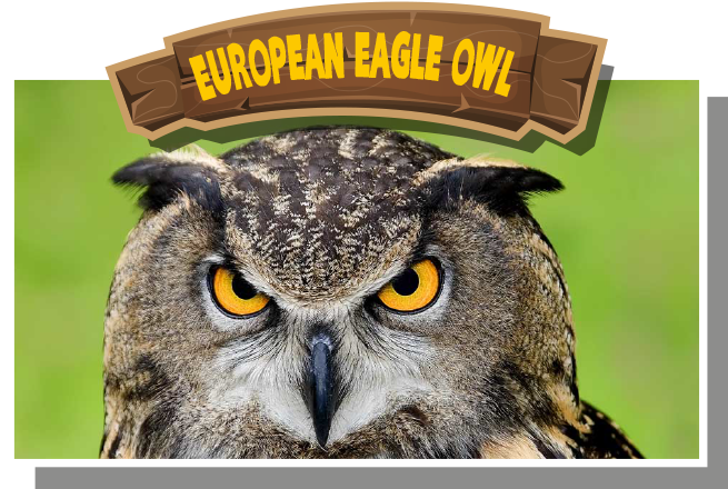 European (Eurasian) Eagle Owl